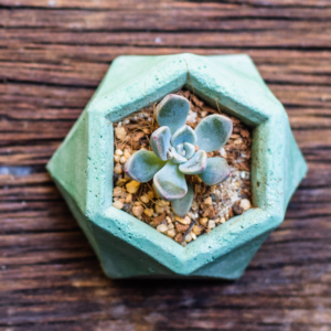 Plant Succulent Gift Ideas