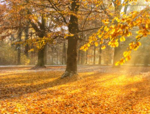 Fall Self-Care Rituals